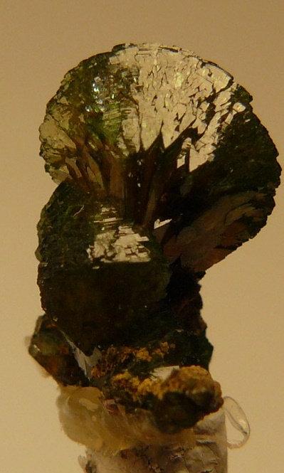 Adamite (variety Cuprian)