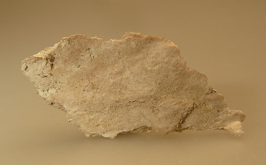 """Tremolite (variety Sepiolite or """"Mountain Leather"""")"""