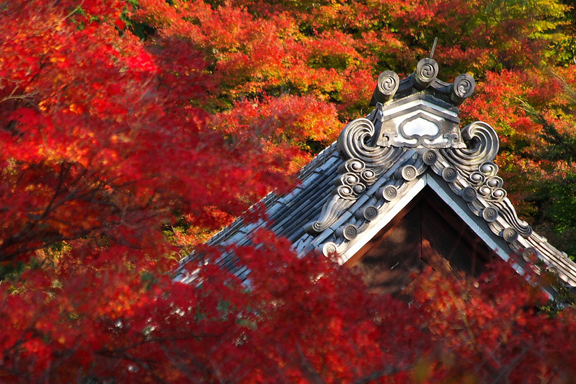Nanzenji in Fall