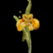 Желтый цветок 1