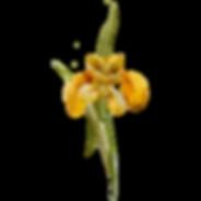 Yellow Flower 1