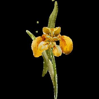 Gelbe Blume 1