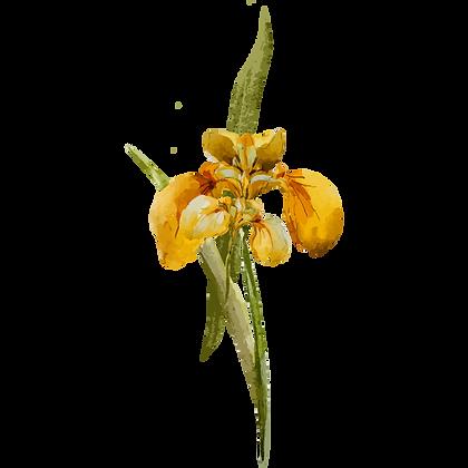 Gele Bloem 1