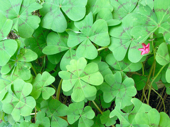 Weekly Words no. 3: Luck of the Irish