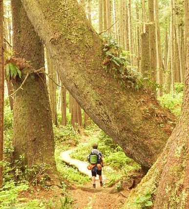Hiker on Juan de Fuca Trai