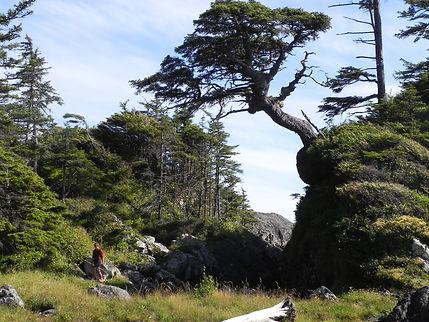 Nootka Trail