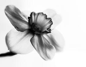 flower-2740457_1920.jpg