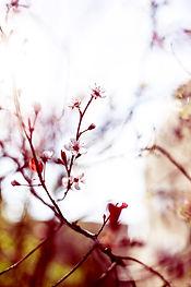 bloom-1846483.jpg