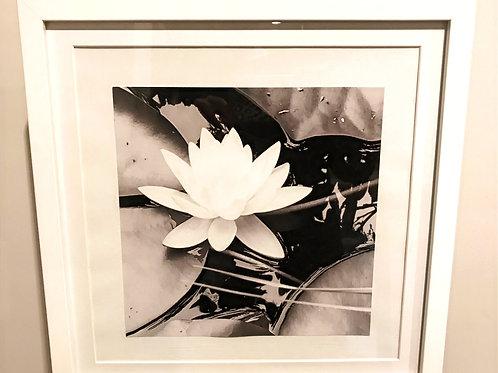 Large 'Lillies at Frensham' Photography.