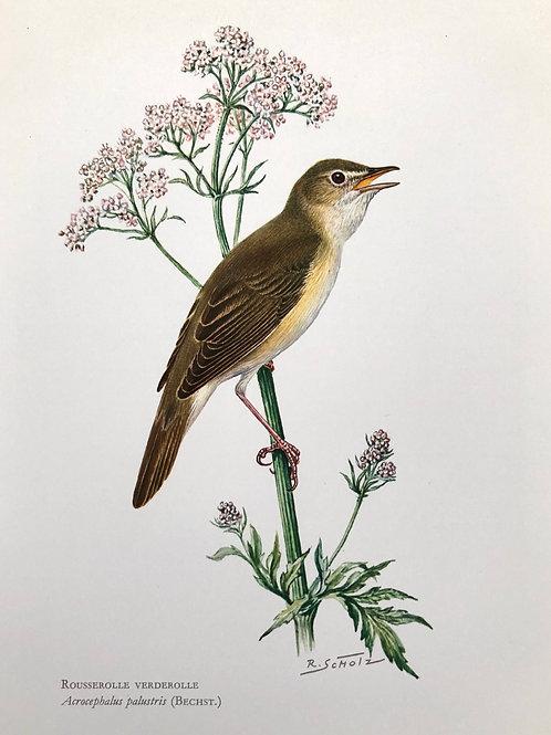 VINTAGE FRENCH BIRD PRINT