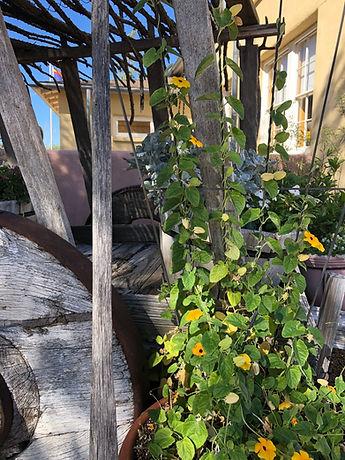 Exuberance Garden 2.jpeg