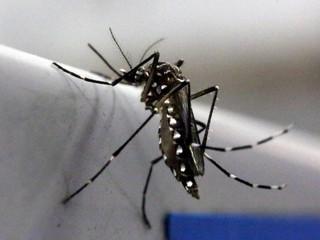 Ingrediente da cerveja ajuda em pesquisas sobre Aedes aegypti no Piauí