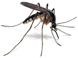 Afinal de contas, o que é o Zika vírus?