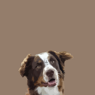 collie2@3x.png