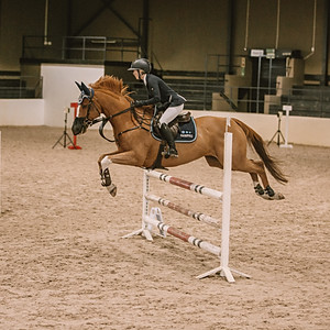 Mistico Show Jumping