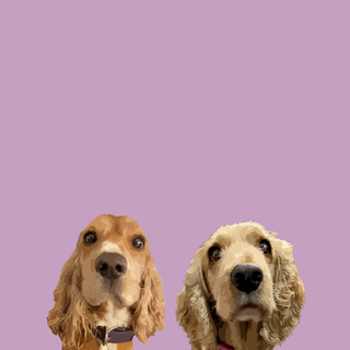 doggies1.png