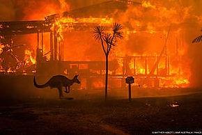 호주1.jpg