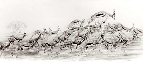 Springbok Herd Pronking