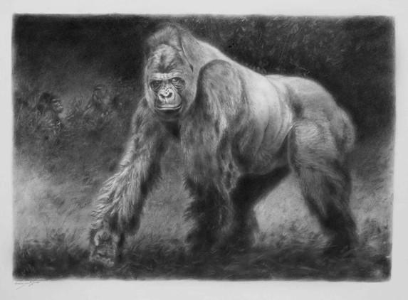 Gorilla. Silverback