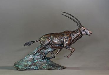 Gemsbok. Height 37cm x 50