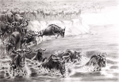Wildebeest. The Great Migration
