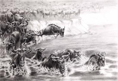 Wildebeest. The Great Migration