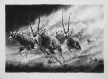 Gemsbok. Wild Dog Hunt