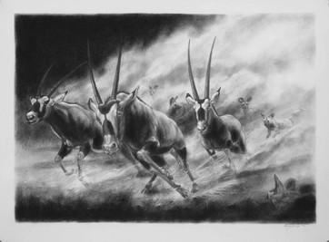 Gemsbok. Wild Dog Hunt