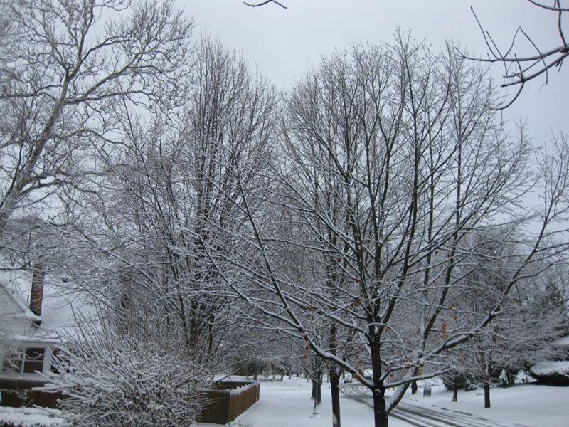 Alameda in snow.jpg