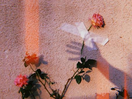 você é uma rosa exclusiva