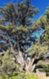 PicsArt_09-02-01.07.20.jpg