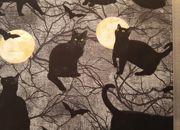 halloween cats.jpg