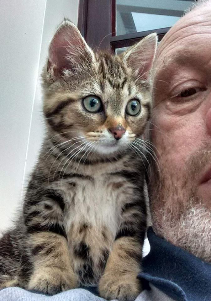 A photo of an adorable kitten on the shoulder of Mike, a Stopford Cat volunteer