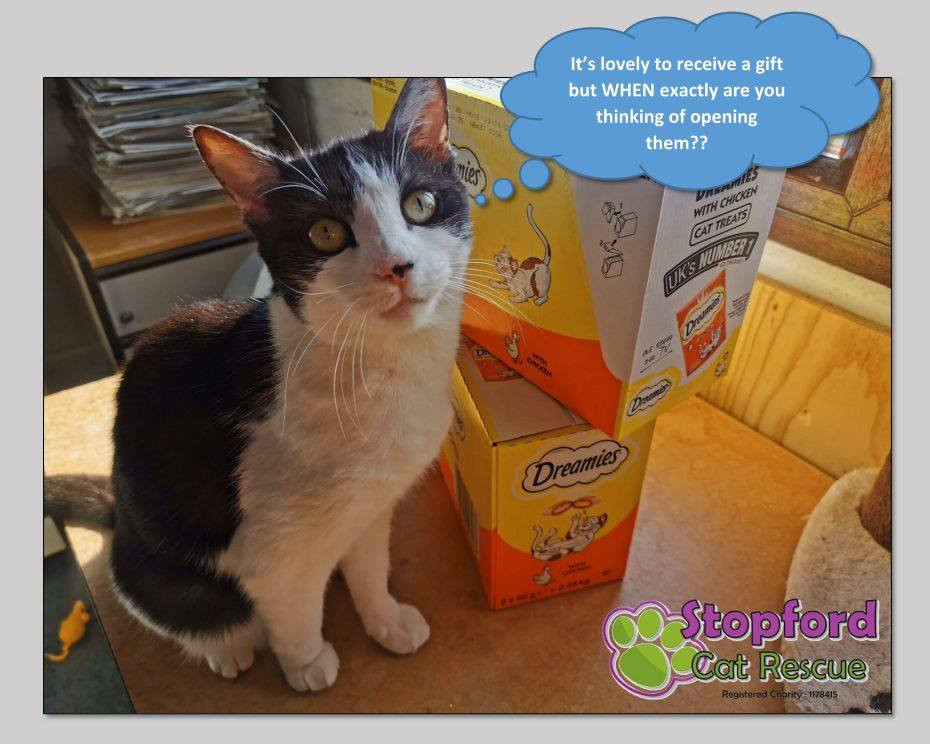 A picture of a cat next to a donation of dreamies, at Stopford Cats in Manchester. A thought bubble reads - It's lovely to receive a gift but WHEN exactly are you thinking of opening them??