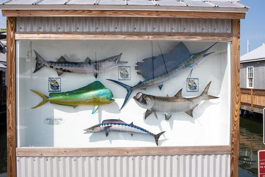 Dry Torgugas Dock- Fish.jpg