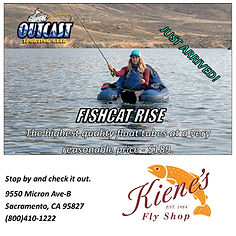 FISH CAT2.jpg