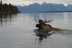 Alaska 2007 365.jpg