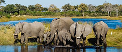Botswana-Chobe-National-Park-Elephants-T
