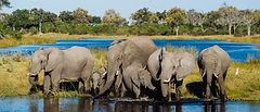 Botswana-Chobe-National-Park-Elephants-T