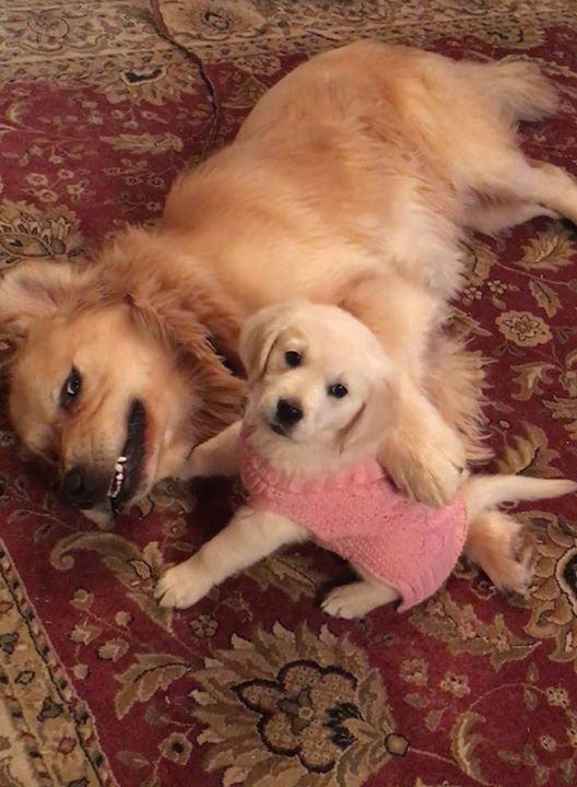 Meet puppy's future girl friend !!    I