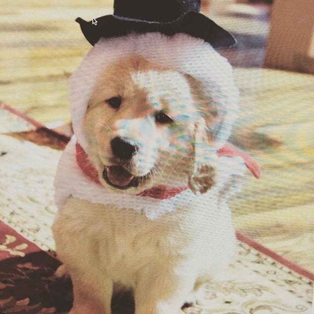 "Christmas ""Puppy"".jpg"
