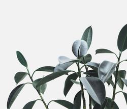 Plant_edited
