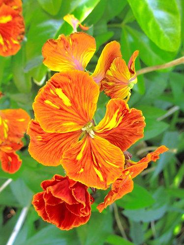 Unidentified Orange Flowers
