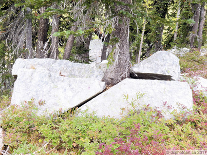 (proto) paper tree beats rock