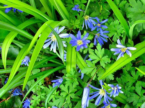 Blue Wildflowers & Greenery