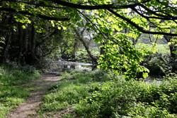 Riverwalk Powerscourt