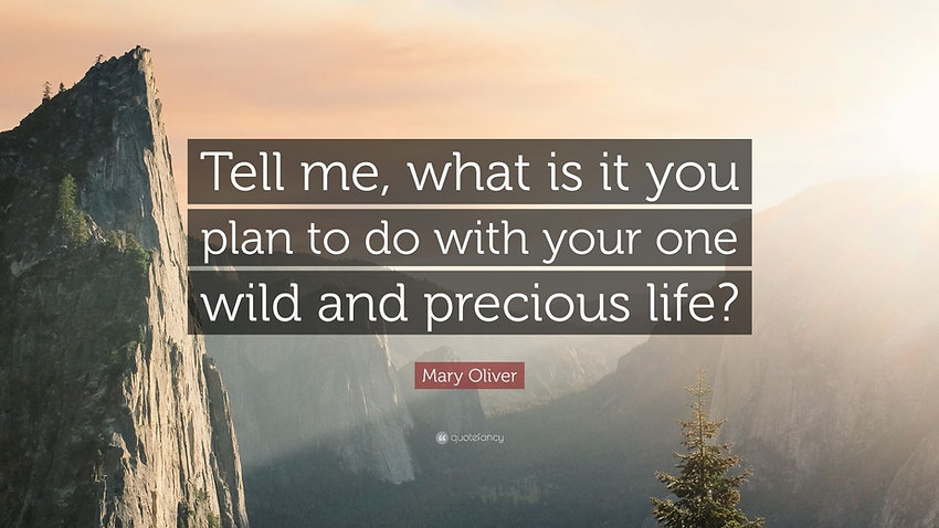 191673-Mary-Oliver-Quote-Tell-me-what-is