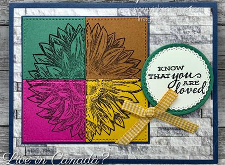 Colour Block Sunflowers