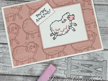 Amazing Pink Sheep