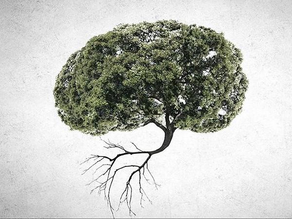 Notre cerveau nous pousse-t-il à détruire la planète ?